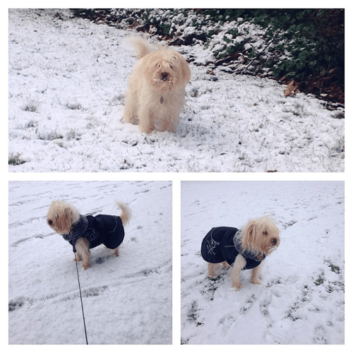 Alfie the dog on his first snowy outing