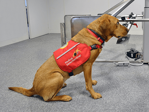 A Medical Detection Dog sitting down