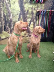Two sogs in Oscar and Hooch collars and leads